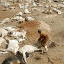 Математики спрогнозировали шестое массовое вымирание к 2100 году