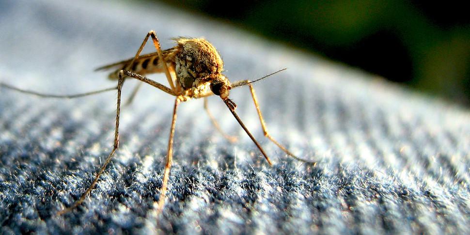 LG выпустила смартфон против комаров