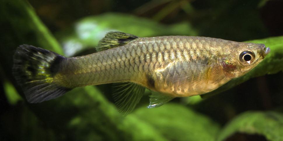 Ученые обнаружили индивидуальные характеры у рыб