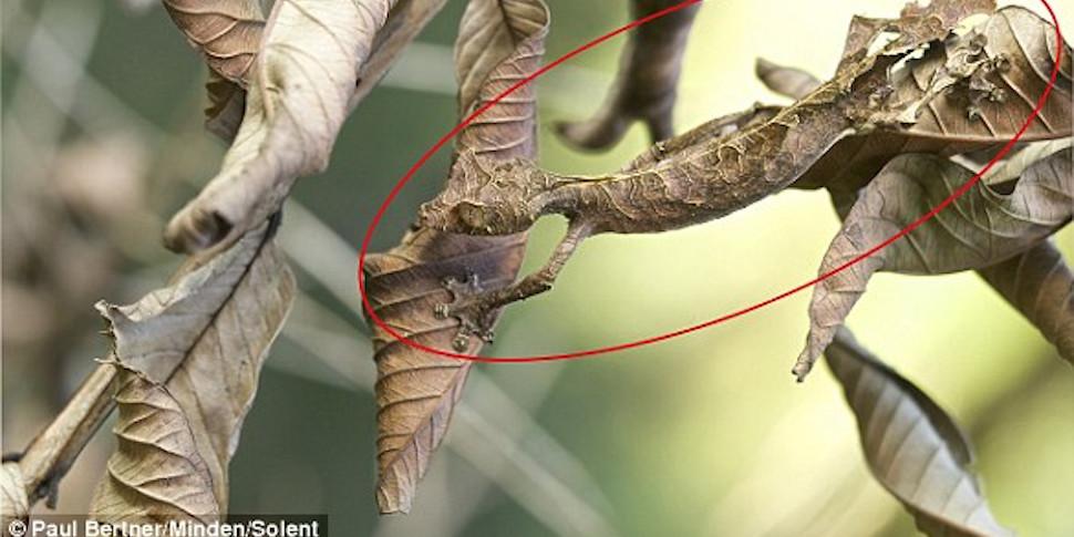 Природа шутит: дерево-динозавр, насекомое-листик и корень в виде дракона