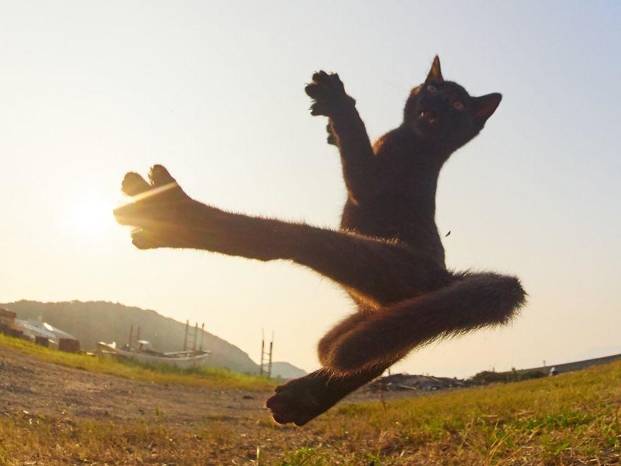 Японский фотограф показал профессиональных котониндзя