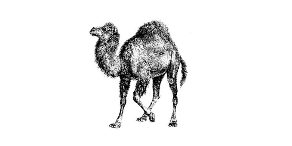 Самым ненавистным языком программирования назвали Perl