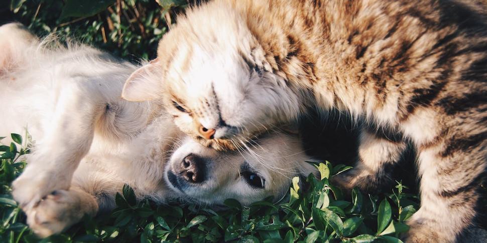 В новом исследовании ученых собаки оказались умнее кошек