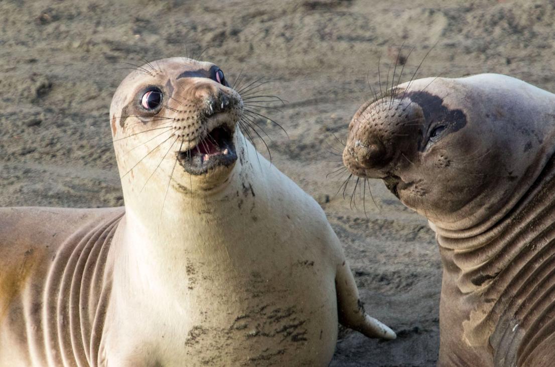 Выбраны самые смешные фотографии животных 2017 года