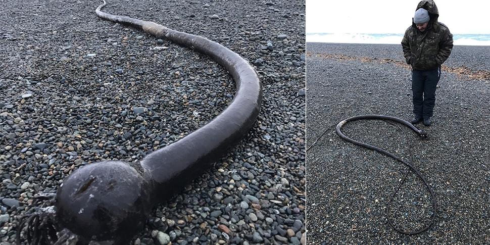 25-метровые «морские змеи» на берегах Чукотки оказались водорослями